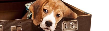 Hund wartet im Koffer auf die Ferien