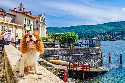 Hund am See - Lago Maggiore