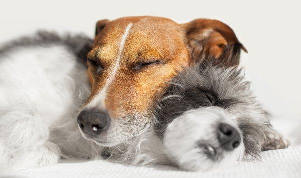 Zwei Hund kuscheln im Urlaub